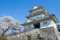 Odawara Castle and cherry spring Stock photo [3131513] Odawara