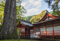 Nationally designated natural monument eight Murasugi and Tonegawa Shrine Stock photo [3132331] Miyazaki