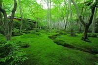Fresh green of Gioji Stock photo [3230888] Gioji
