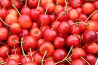 Cherries (Nishiki Sato) Stock photo [3233111] And