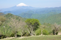 I hope than fresh green Nabewarizan summit Mount Fuji Stock photo [3234027] Tanzawa