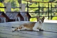 候硐(ホートン)猫村の猫