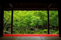 Fresh green of En-kotera Stock photo [3241897] En-kotera