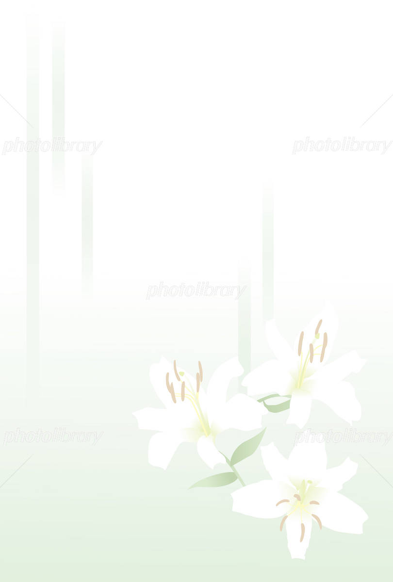Lily of mourning postcard イラスト素材