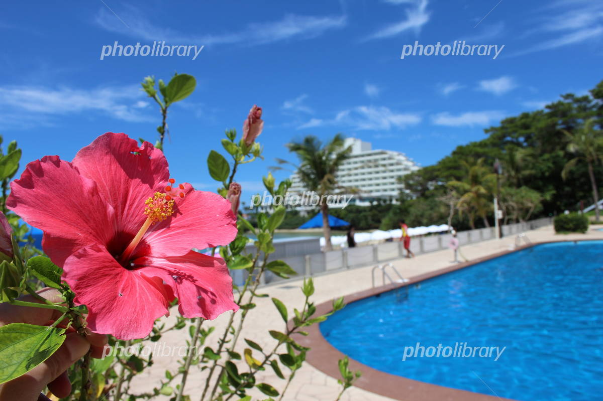 Okinawa Hibiscus Photo