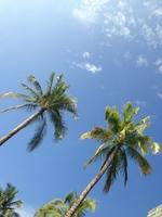 Palm tree Stock photo [3335899] Palm