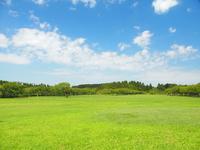 Grassland of fall of Misato park Stock photo [3336290] Prairie