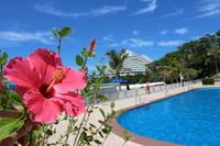 Okinawa Hibiscus Stock photo [3336901] Okinawa