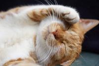 tea cat sleeps Stock photo [3425657] CAT