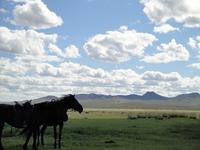 Prairie of Mongolia Stock photo [3426163] Mongolia