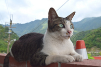 Manly cat Stock photo [3428229] 猫