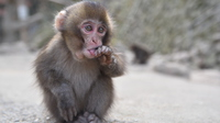 Baby monkey Stock photo [3519085] APE