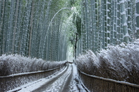 Winter of bamboo forest Stock photo [3519769] Bamboo