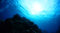 Okinawa Kume Island underwater landscape of Stock photo [3524829] Okinawa