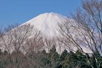 足柄サービスエリアから見た富士山