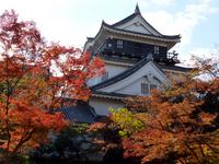 Autumn leaves and Okazaki Castle castle tower Stock photo [3631275] Aichi