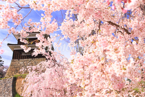 April Nagano Ueda Castle, Minamiyagura and weeping cherry tree Photo