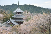 Yoshino Mount Kinpu temple Sakura Stock photo [3734347] Yoshino