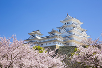 Sakura bloom Himeji Castle Stock photo [3742703] World