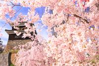 April Nagano Ueda Castle, Minamiyagura and weeping cherry tree Stock photo [3744720] Ueda