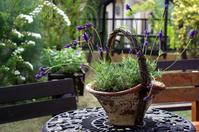 Lavender Stock photo [116270] Herb