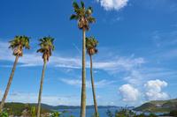 Palm trees and Toba sea Stock photo [3851161] Tree