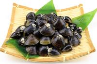 Freshwater clam Stock photo [3854973] Freshwater