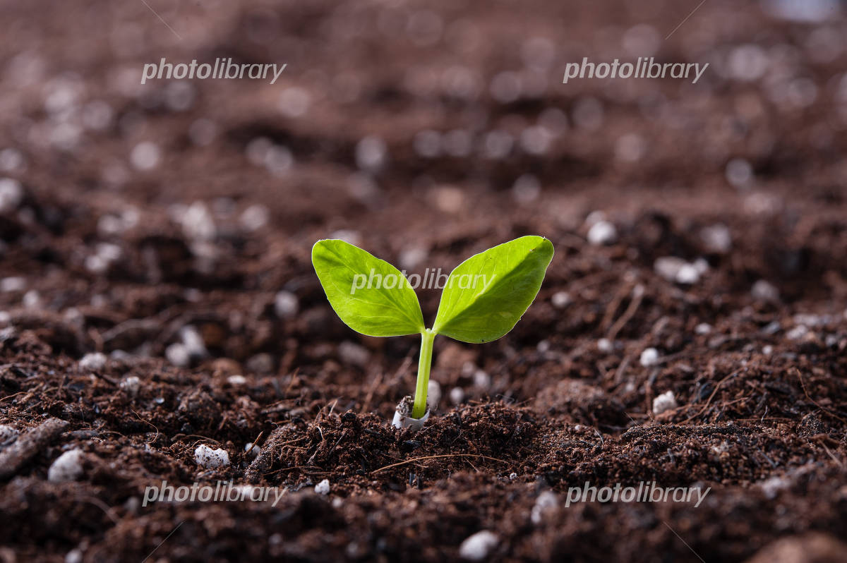 How the shoots are growing from soil Photo