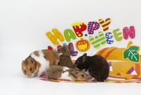 Golden hamster Stock photo [3950232] Golden