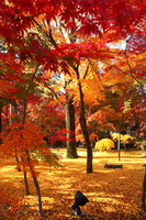 Autumn leaves of Eikan-do stock photo