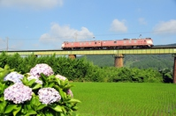 Hydrangea and gage train of Nippō Main Line Stock photo [3951821] JR
