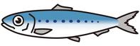 True sardine [4038552] Pilchard
