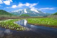 Skunk Cabbage and Oze Shimotashiro Stock photo [4041291] Oze