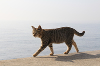 Cat walk embankment Stock photo [4043933] Cat