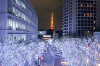 Roppongi Keyakizaka Illumination Stock photo [4109359] Roppongi