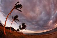 ハワイのワイアナエビーチ