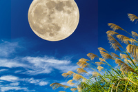 Landscape with Moon Stock photo [4112584] Month