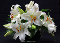 Casablanca arrangement Stock photo [148945] Flower