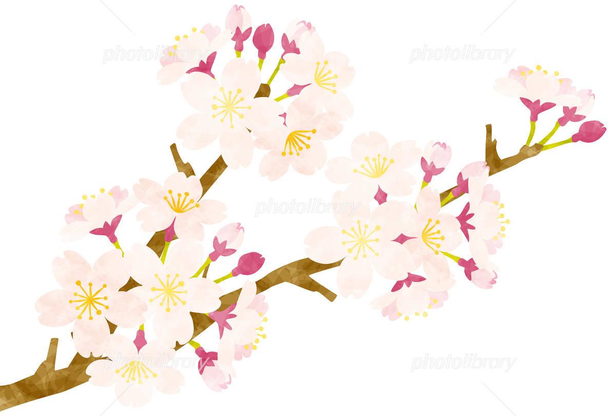 春 桜の花 イラスト素材 4881085 無料 フォトライブラリー