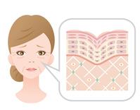Shiwahada a cross-sectional view [4987645] skin