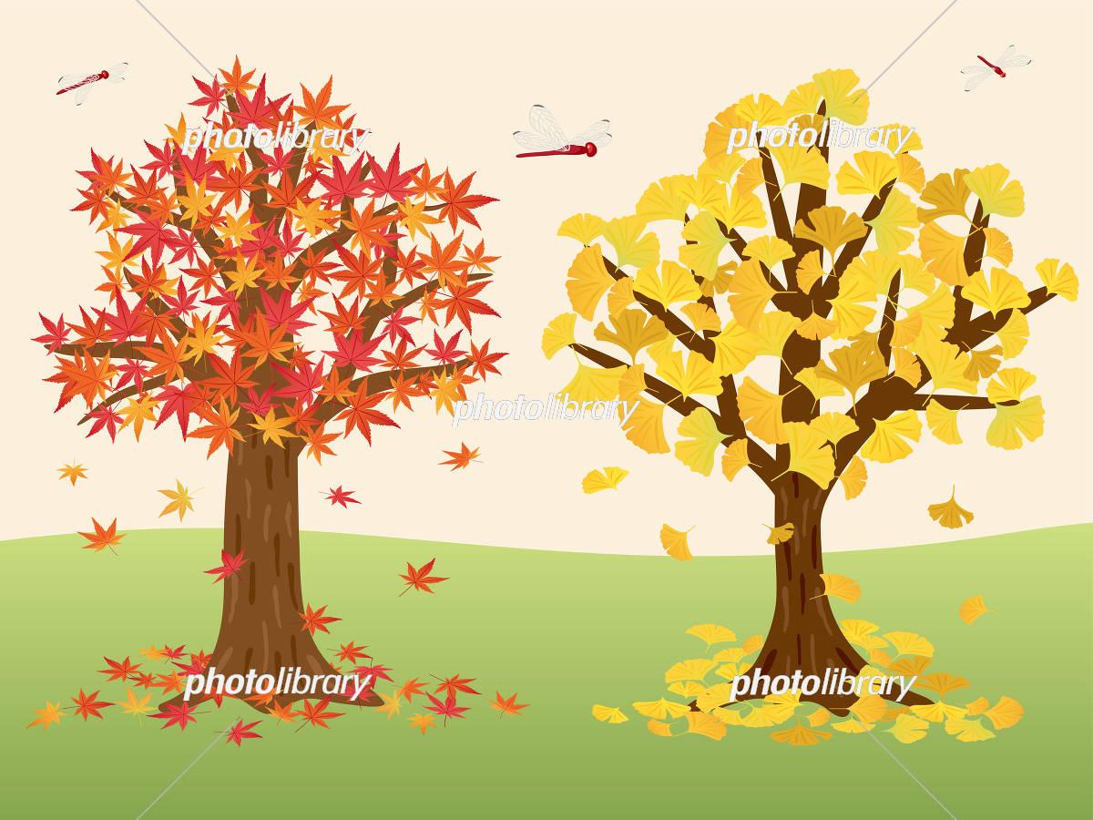 もみじの木とイチョウの木