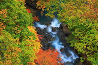 Matsukawa Stream of autumn leaves  Photo
