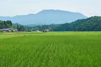 尾神岳と水田