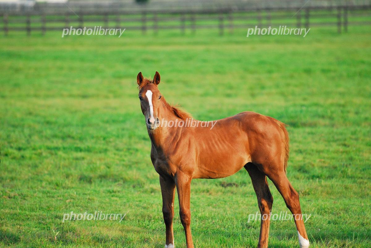 駿馬の写真