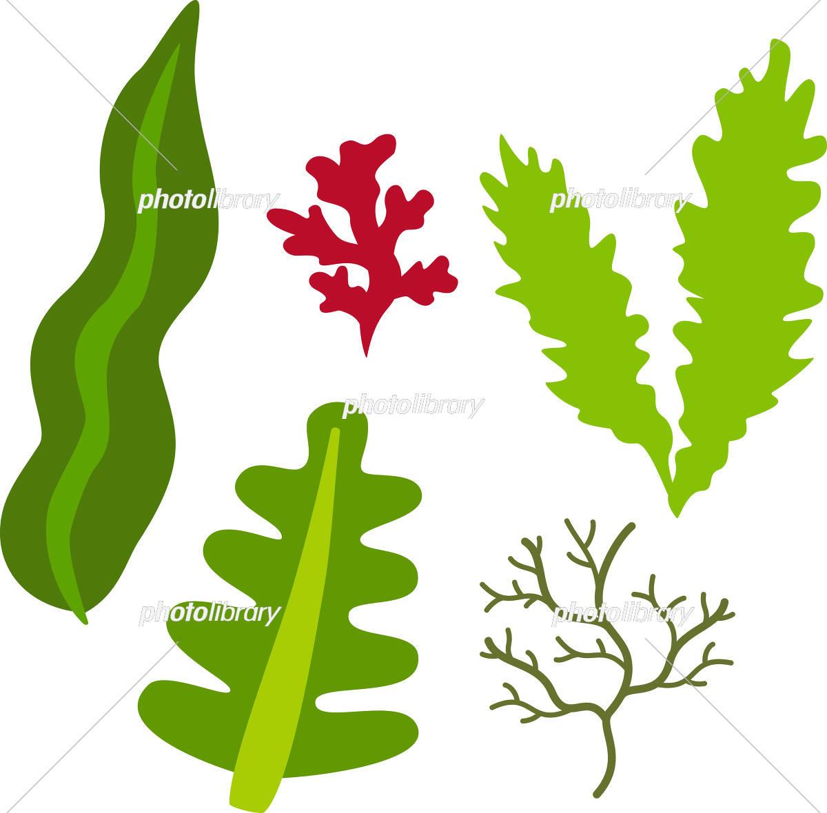 海藻のイラストセット イラスト素材 5360979 フォトライブラリー