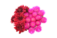 Bouquet of chrysanthemum and thousands of scolars  Photo