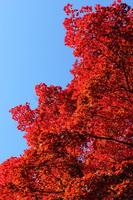 写真 Colorful autumn leaves(5362003)