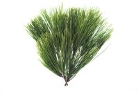 写真 Pine needle(5363633)