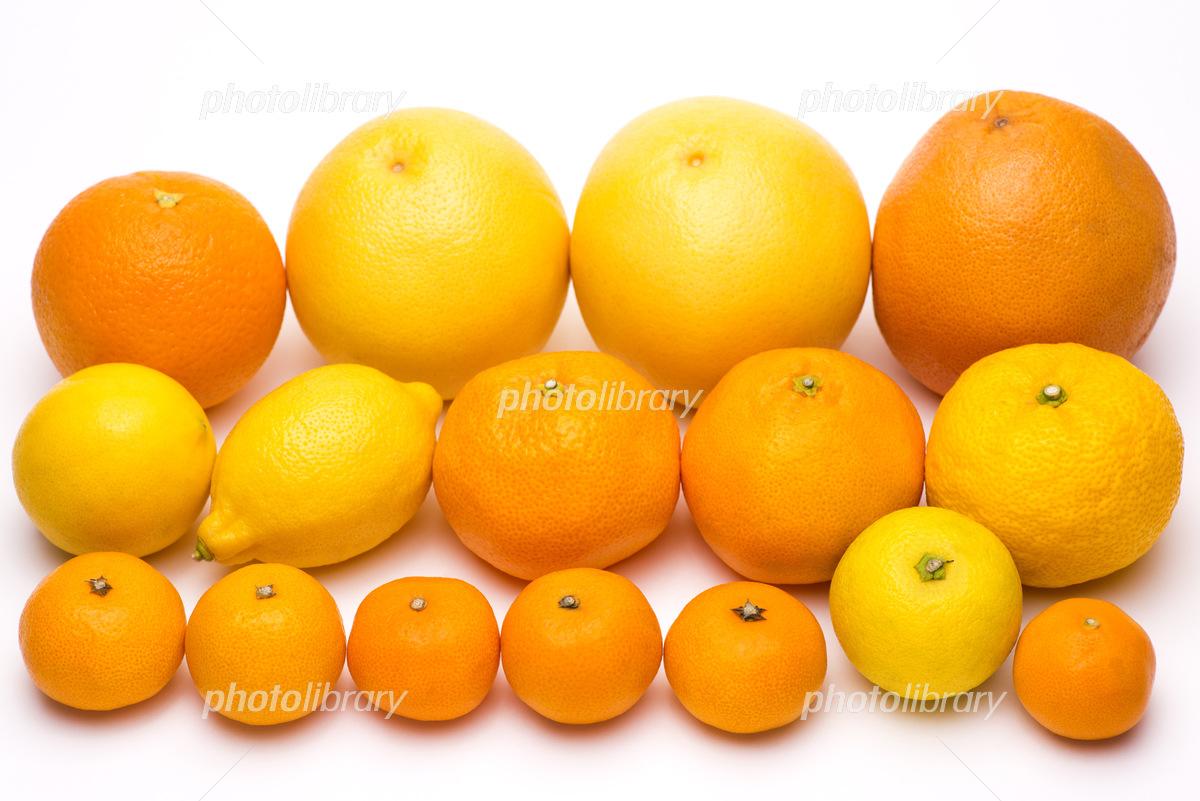 白背景の色々な種類の柑橘類 写...