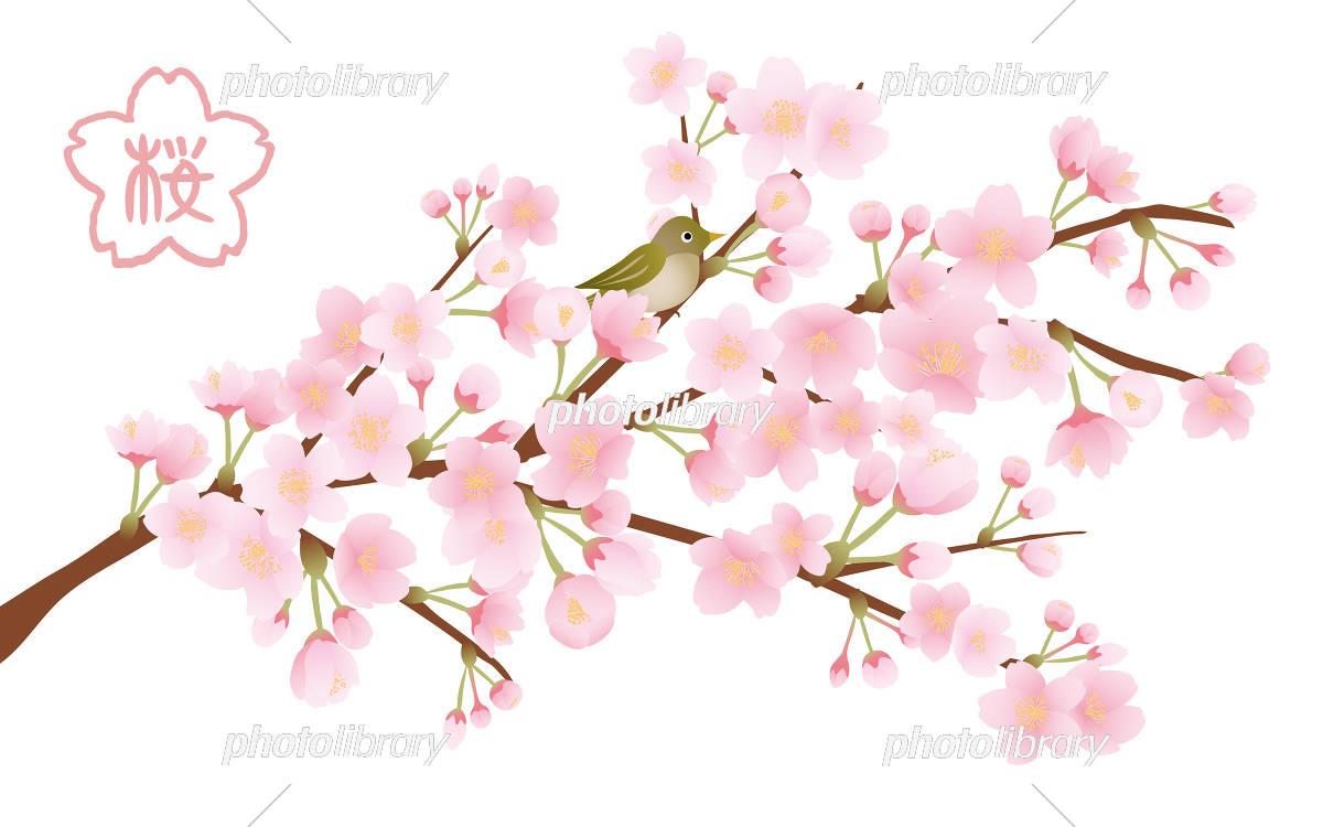 桜の木 イラスト素材 イラスト素材 5456418 フォトライブラリー